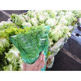 Embalagem para alface hidropônico à venda na Vila Santa Cruz