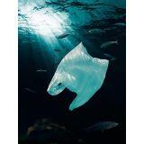 Mercado de sacola plástica biodegradável em Furnas
