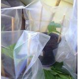 Saco plástico de muda no Jardim Rizzo